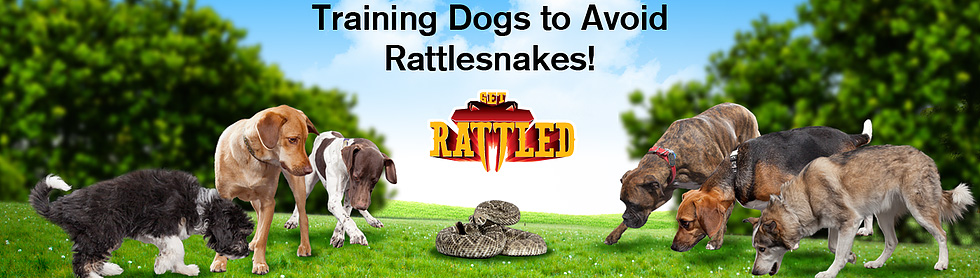 GetRattled, Rattlesnake Avoidance Training